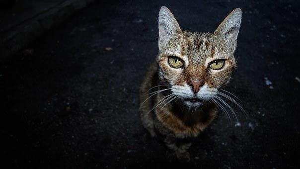 old-cat-1390365__340