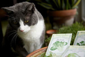 6 Fruits And Veggies Your Cat Will Love