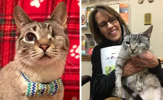 One-Eyed Cat Finally Meets An Adopter Who Sees His True Beauty