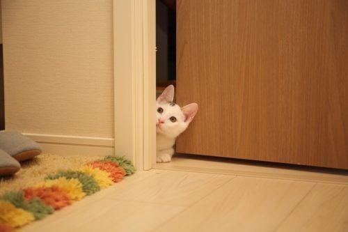 prevent cat scratching wallpaper