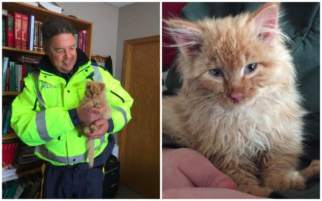 Frozen Kitten Mistaken For A Chunk Of Ice Makes A Miraculous Recovery
