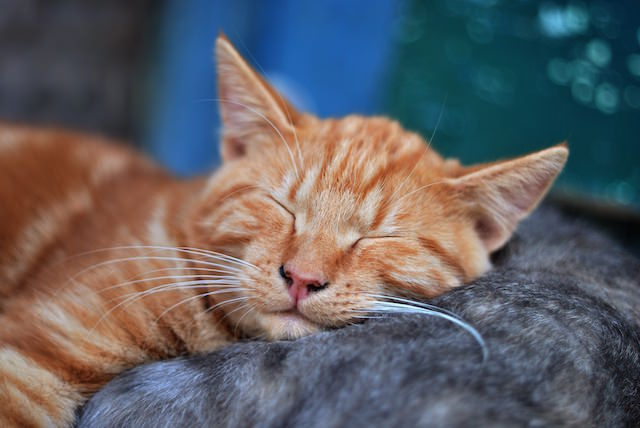 Clever Names For Orange Cats