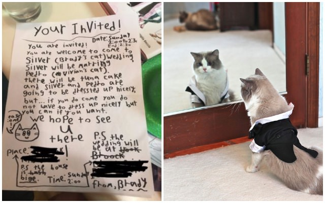Little boy sends out adorable invitations for cat wedding little boy sends out adorable invitations for cat wedding iheartcats junglespirit Gallery