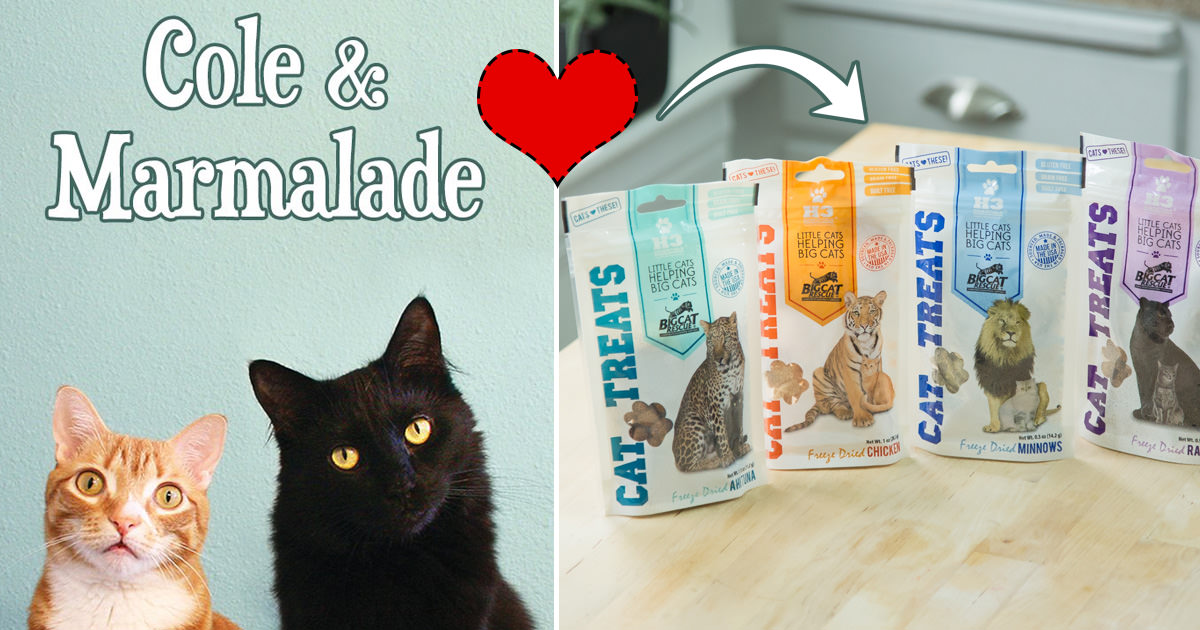 Will Your Cat Love These Treats As Much As These Celebrity Kitties?