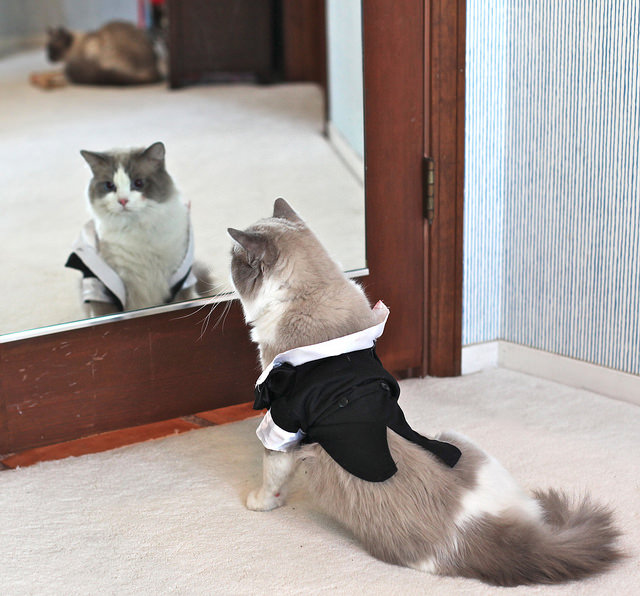 Little boy sends out adorable invitations for cat wedding note not actual groom image source steve jurvetson via flickr junglespirit Images
