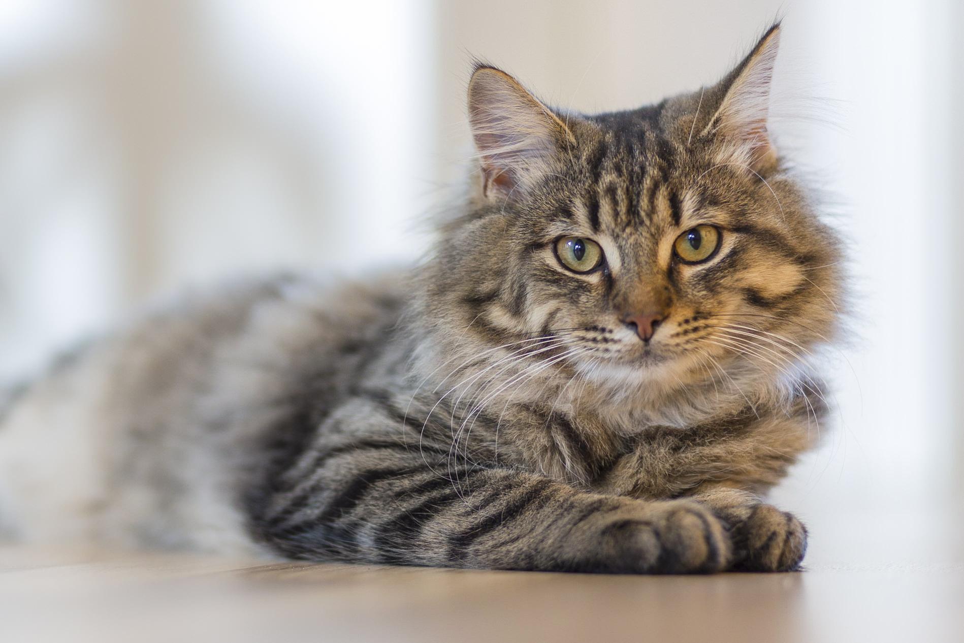 quay steel cat