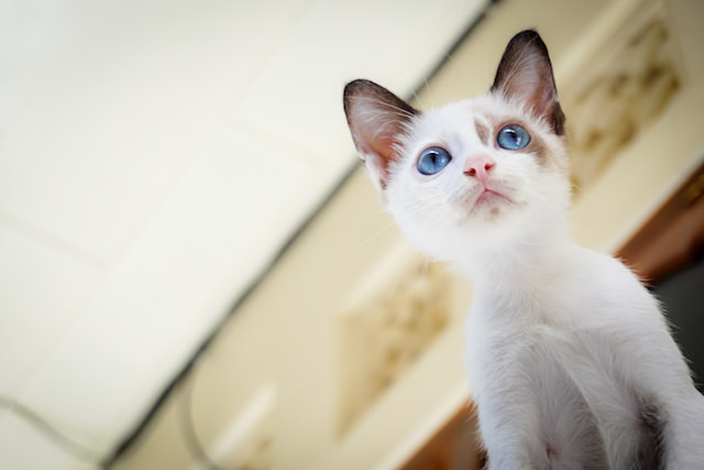 Ask A Vet Why Are Kittens Born With Blue Eyes