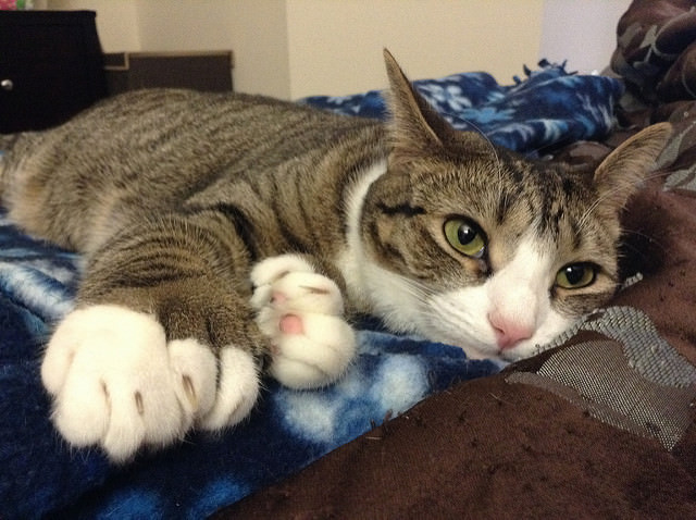 15 Clever Names For Polydactyl Cats