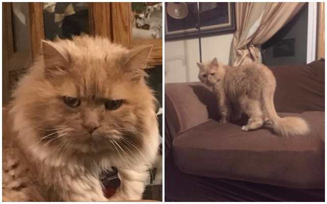 "Woman Asks Shelter For ""Their Least Adoptable Cat,"" Gives Skittish Senior A Forever Home"