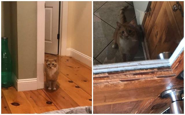 cat treats urinary problems