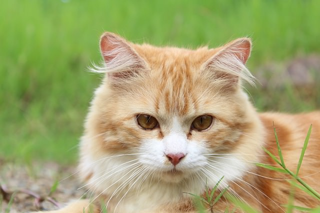6 Ways Your Cat Can Enjoy The Outdoors In Safety