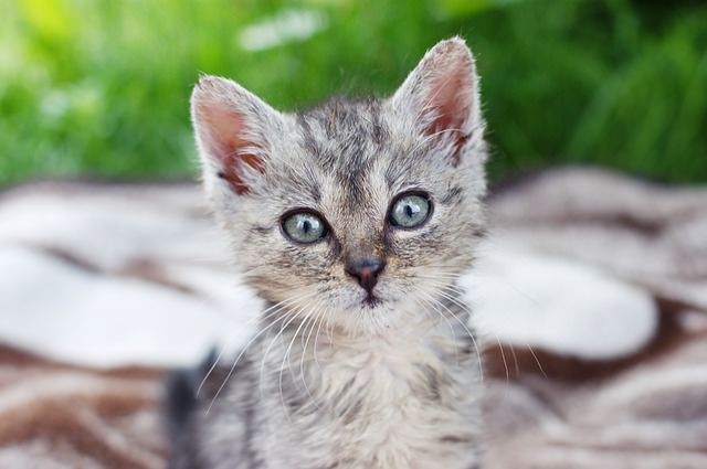 Facts About The Cats Eyes