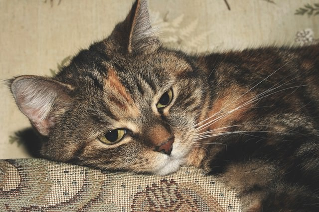 8 Common Causes Of Sudden Weight Loss In Cats