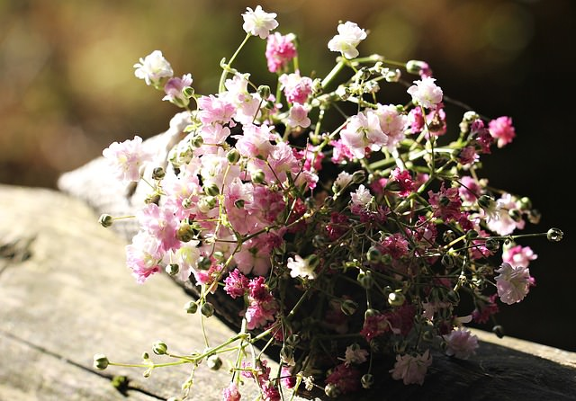 10. Common Snapdragons