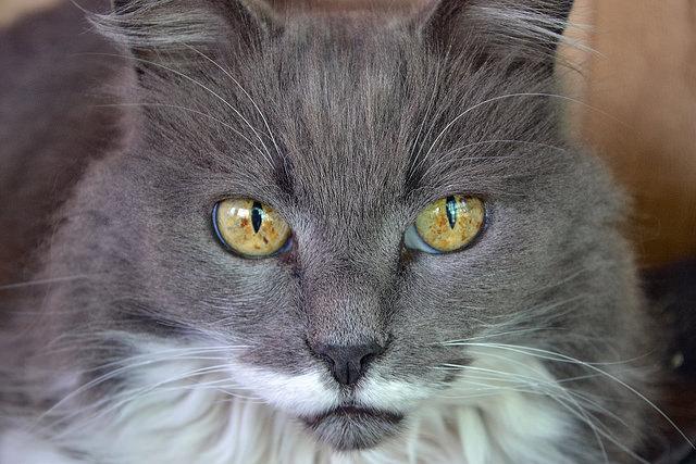 Cat Lady Name Eharmony