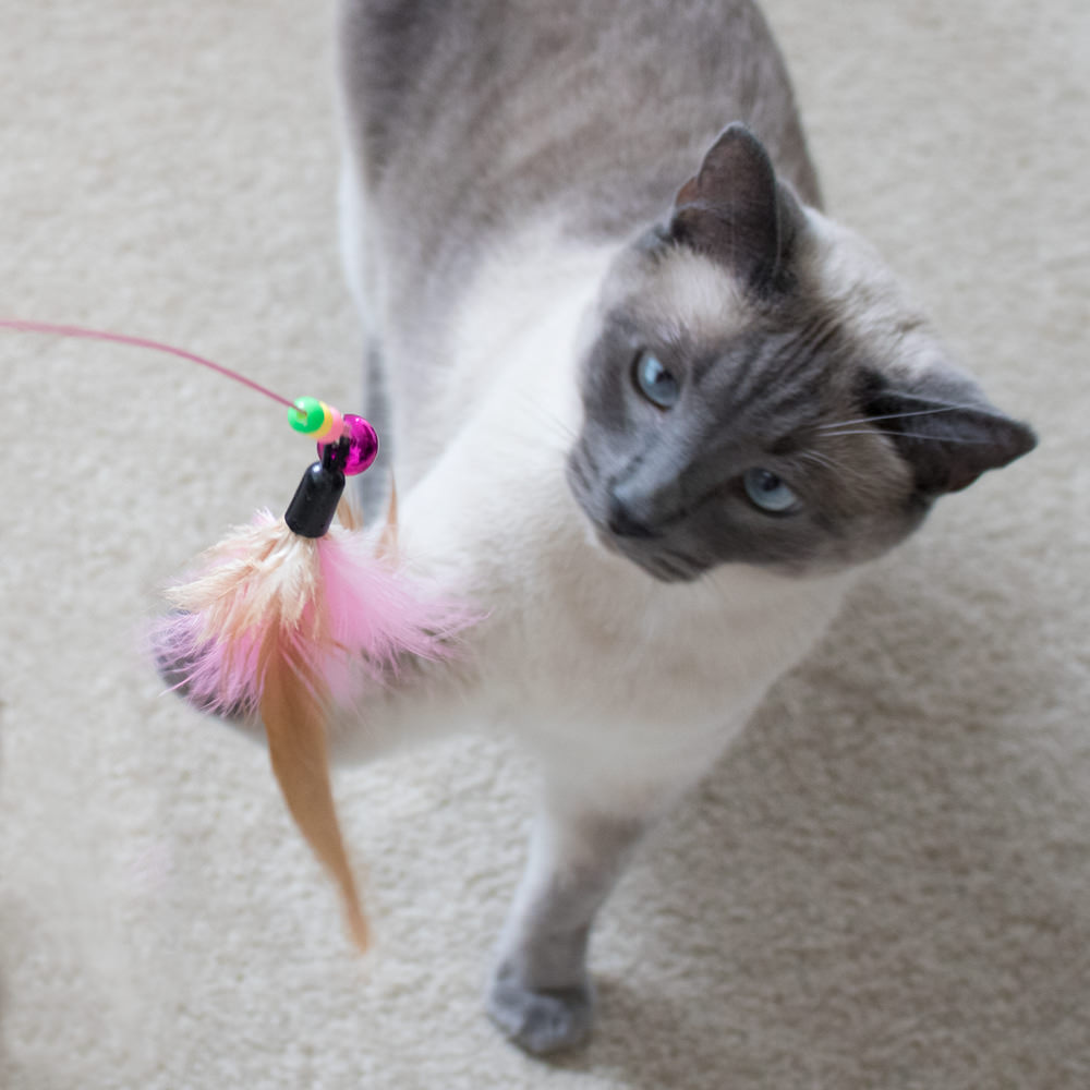 Project play flexible feather wand with bells cat toy for Cat wand toys