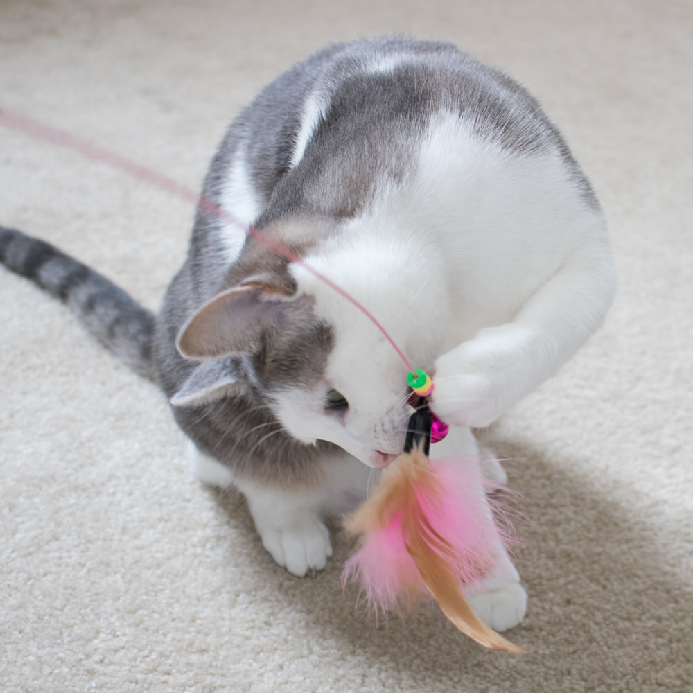 Project Play™ Flexible Feather Wand With Bells Cat Toy - iHeartCats.com