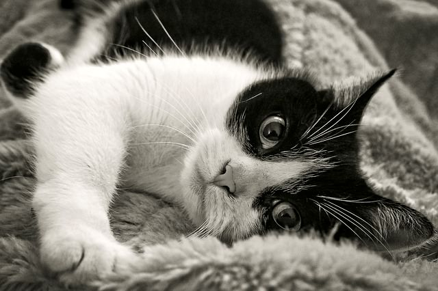 5 Causes Of Seizures In Cats