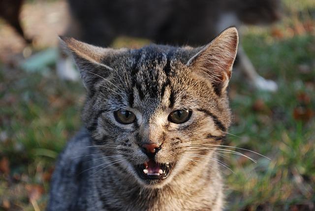 Hasil gambar untuk mouth breathing cat