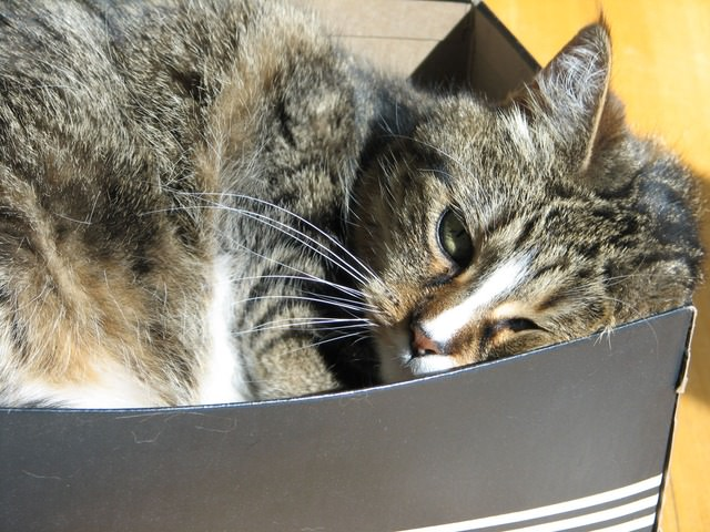 cat-2737_640 - The 7 Most Common Diseases That Affect Senior Cats - Lifestyle, Culture and Arts