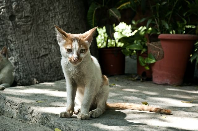 cats-61240_640 - The 7 Most Common Diseases That Affect Senior Cats - Lifestyle, Culture and Arts