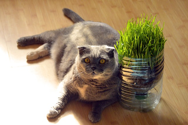 fat-1517449_640 - The 7 Most Common Diseases That Affect Senior Cats - Lifestyle, Culture and Arts