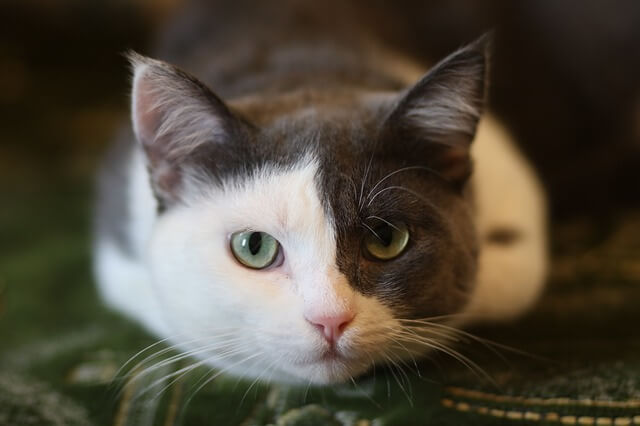 best cat food to prevent diarrhea