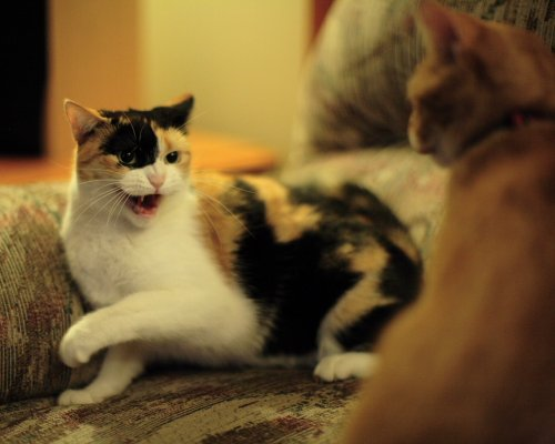 cat urinating on bed remedies for sore