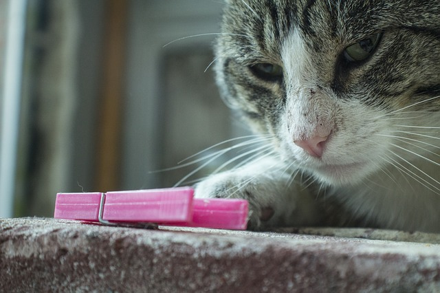why do cats love to knock things over iheartcats com