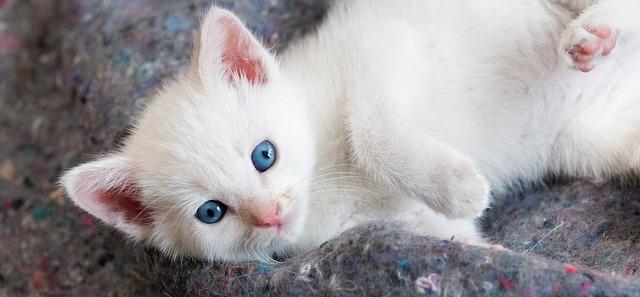 kitten hugging