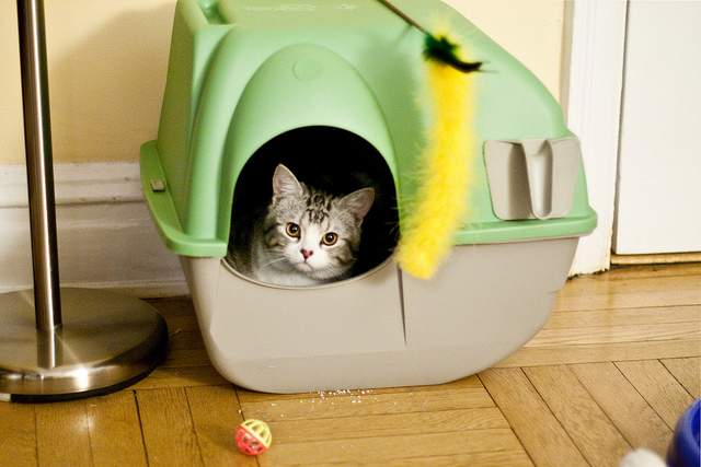 Why Your Cat Might Not Be Using a Litter Box