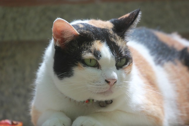 10 Reasons Cats Poop Outside Their Litter Box How To Resolve The