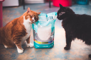 Give Your Cat Her Best Life With PrettyLitter