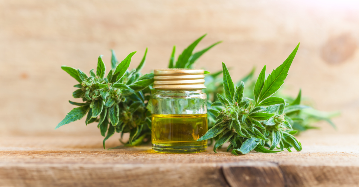 CBD Oil for Cats and Dogs: Here's What You Need To Know