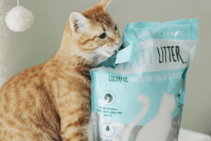 PrettyLitter Can Save Your Cat's Life
