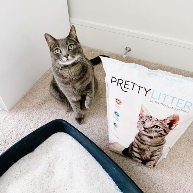 Grey cat and PrettyLitter