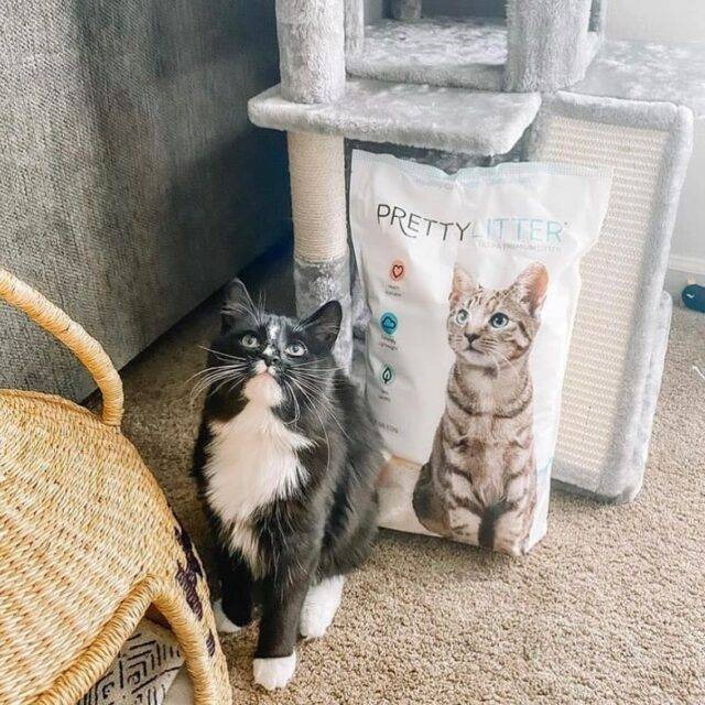 PrettyLitter from scratching post