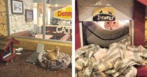 Dennys cat cover