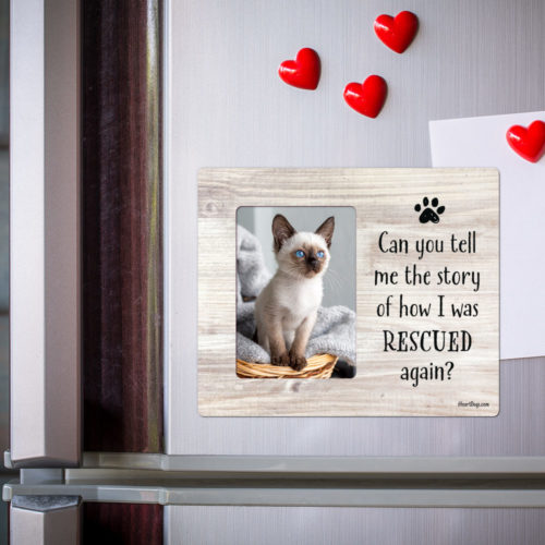 'Can You Tell Me The Story'  Picture Frame Magnet
