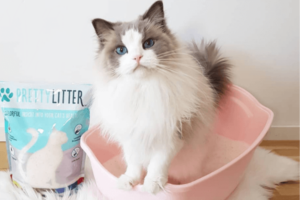 Clay vs. Crystal Litter: What's the Difference?