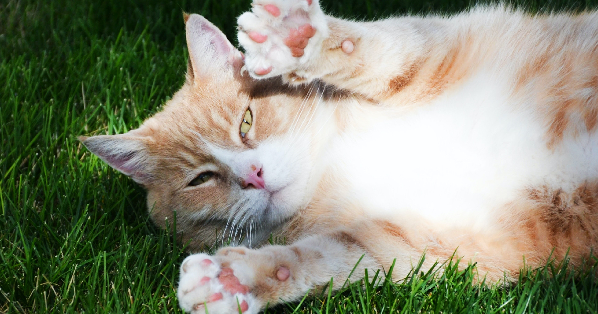 39 Amazing Facts About Cats Iheartcats Com Fun Facts