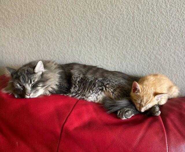 sleeping cat and kitten