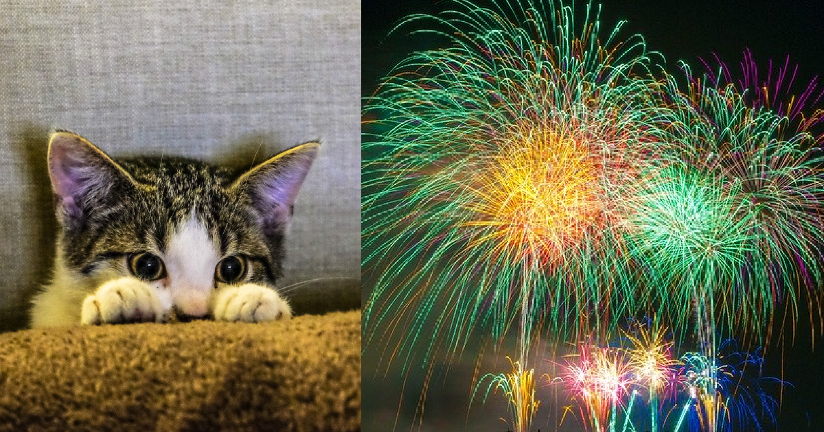 cats firework anxiety