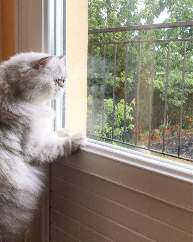 cat chatter bird