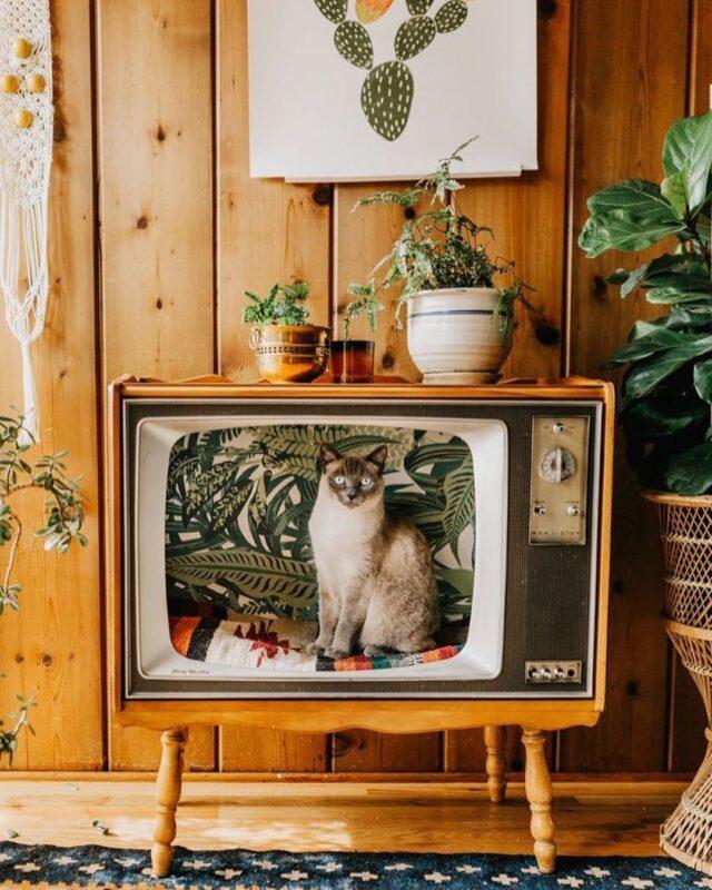 vintage tv cat bed