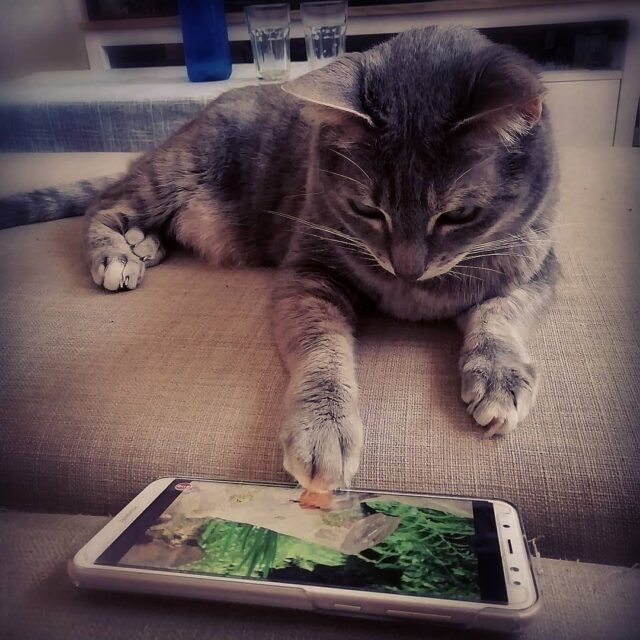 best apps for cats