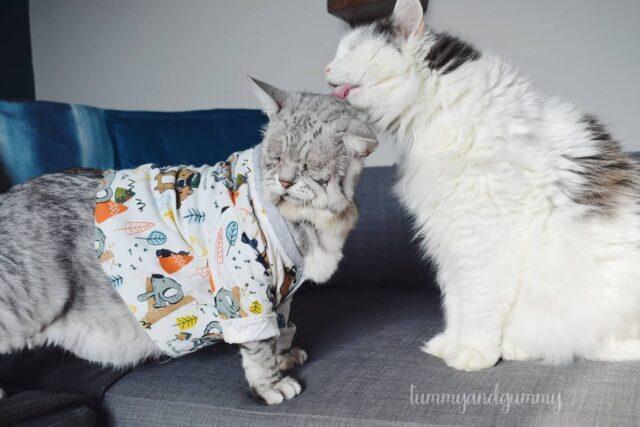social media cat accounts