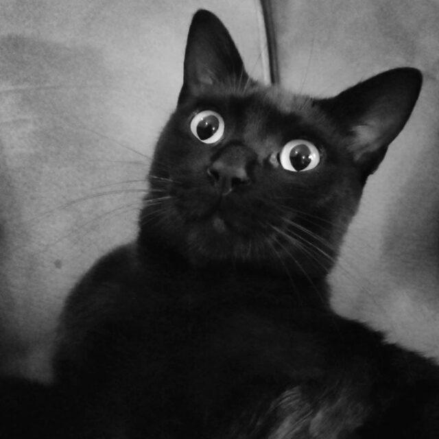 halloween cat