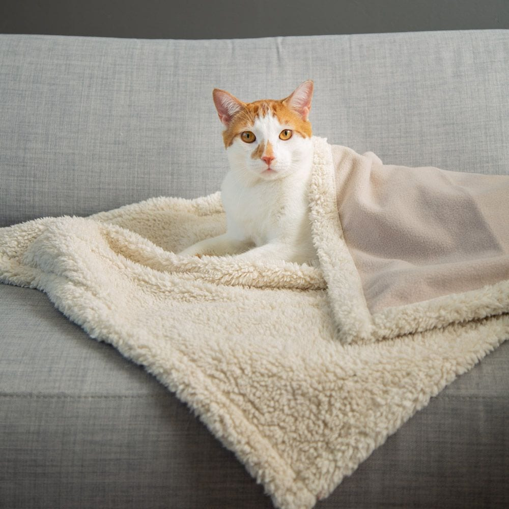 Give Warmth™️ Buy One Give One Sherpa Premium Cat Blanket