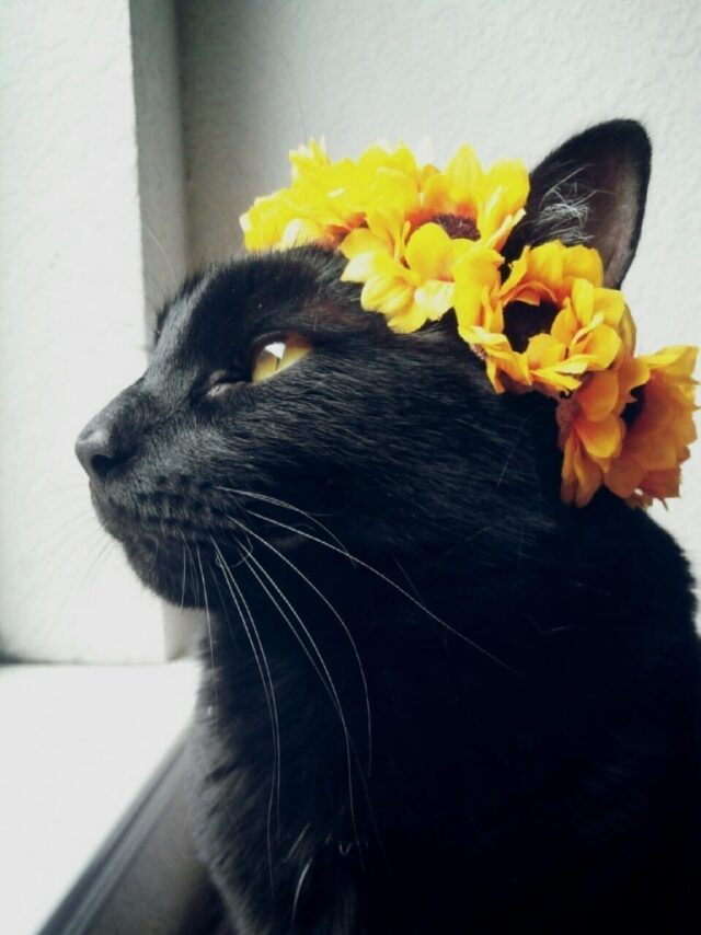 how to make flower crown